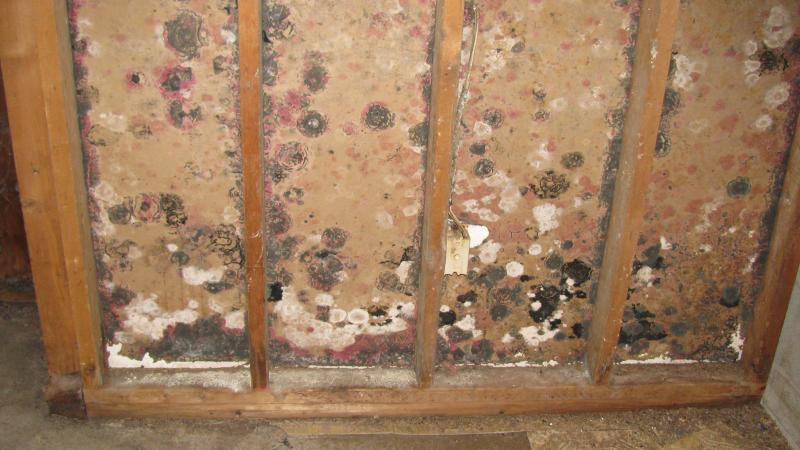 A Trustworthy Home Repair Amp Mold Remediation Service